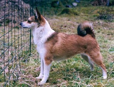Boromir-Maalfrid-Maanfaxe-(vet)