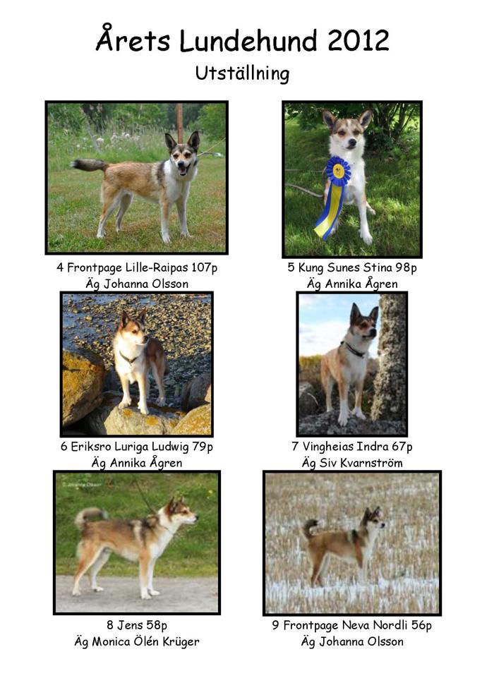 Årets lundehund sid2