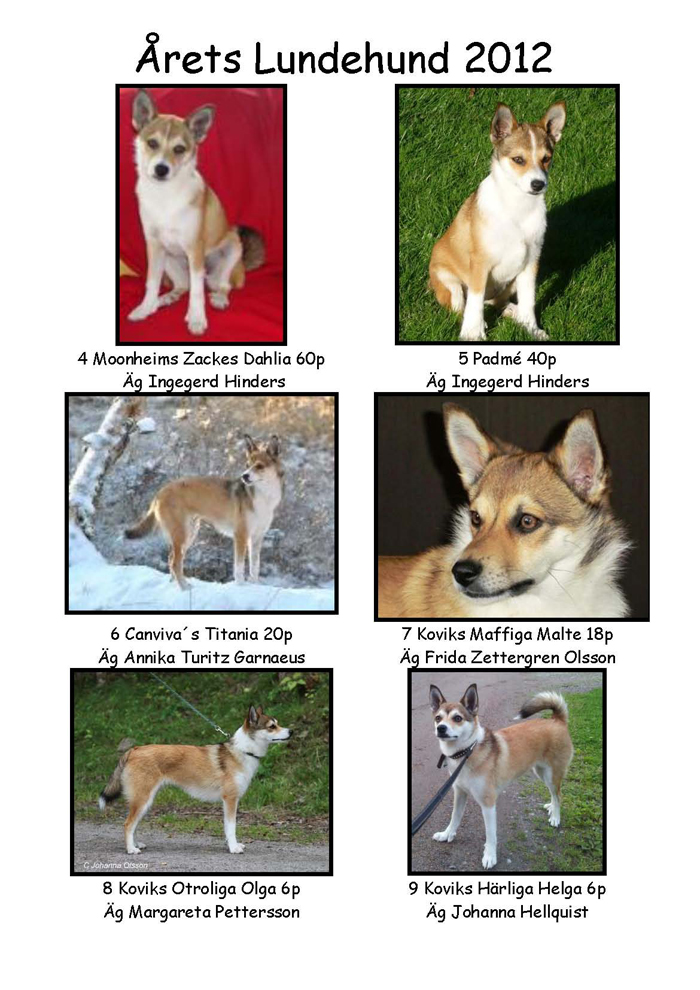 Årets lundehund valp2