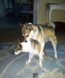 Stina & Foxie